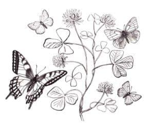 бабочки на кусте
