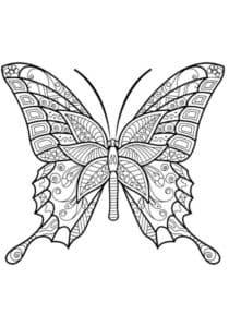 бабочка с полосами антистресс
