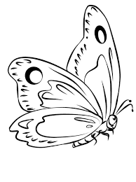 бабочка с маленькими лапками