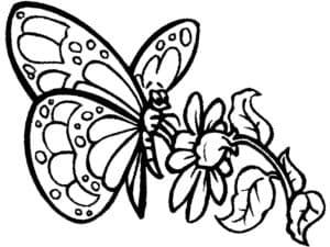 бабочка и цветочек