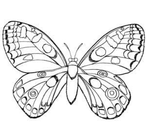бабочка с узорами и кружками