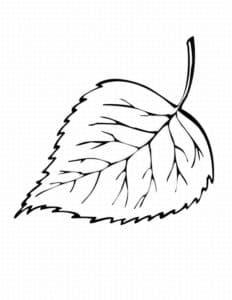 лист березы