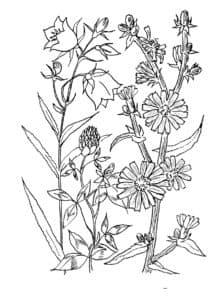 раскраска для детей цветочки