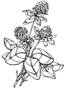 цветы детская раскраска