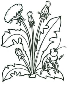 цветы и жук