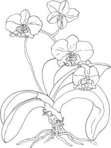 Цветы с длинным стеблем