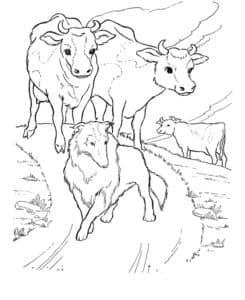 коровы и собака