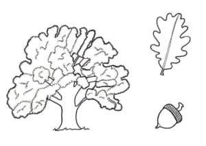 Дуб и лист с желудем