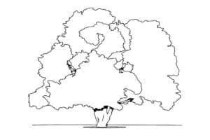 трафарет дуб