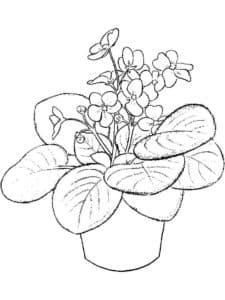 Красивый цветок фиалка