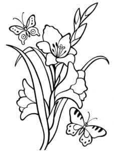 Раскраска для детей гладиолусы