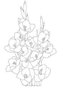 Детская раскраска гладиолусы