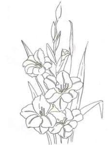 красивые цветы гладиолусы