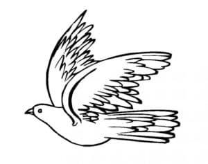голубь с красивыми крыльями