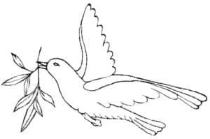 голубь с веточкой в клюве