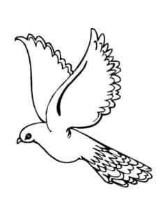 голубь обыкновенный раскраска