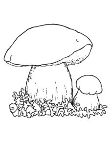Два гриба раскраска