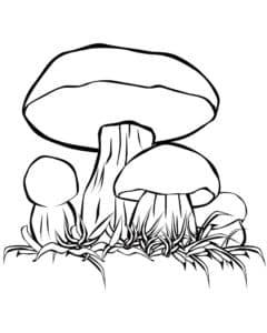 Четыре грибочка детская раскраска