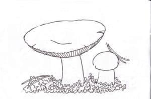 невкусные грибы