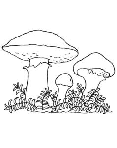 Три грибочки