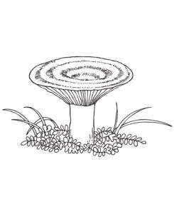 гриб с узорами