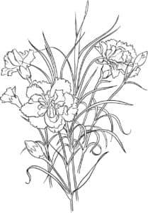 Цветы гвоздика