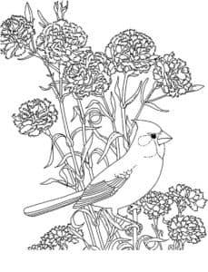 гвоздики и птичка