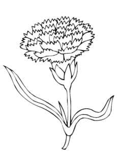 гвоздика и листья