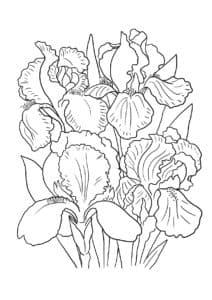букет цветов ирис