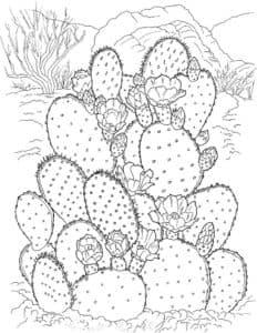 плоские кактусы