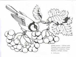 птичка кушает калину
