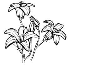 колокольчики цветы раскраска