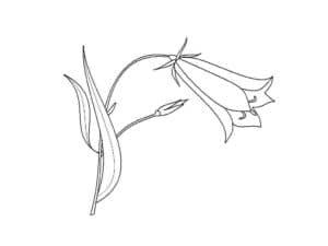 Маленький цветок колокольчик