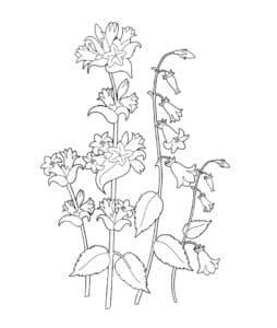 колокольчик красивый цветок
