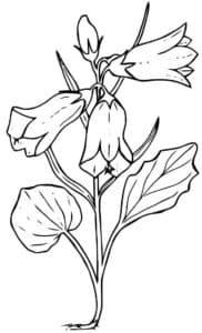 Раскраска детская цветы