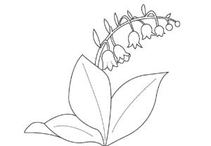 Ландыш и большие листья