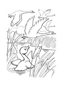лебеди летят