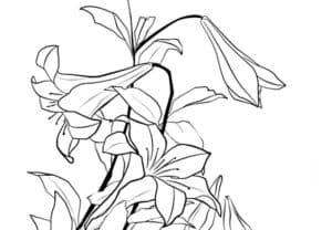 раскраска детская лилия