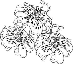три лилии