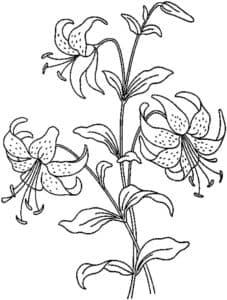 лилии на кустике