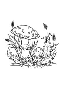 Мухоморы и трава раскраска детская