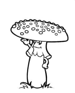 Мухомор с плоской шляпой