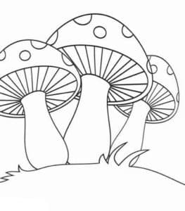 Три гриба мухомора