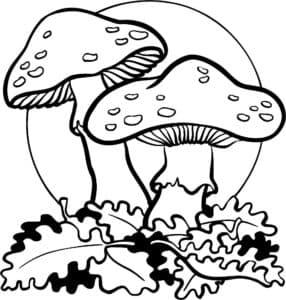 Мухоморы и листья