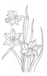 три цветка нарцисс
