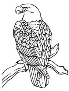 Орел на ветке