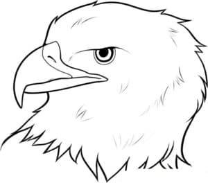 лицо орла