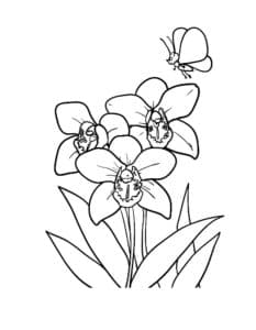 Орхидеи и бабочка