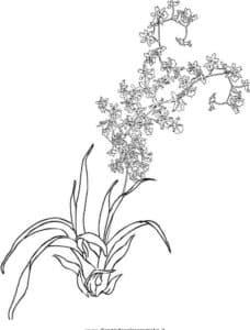 много орхидей