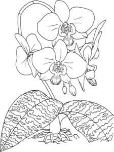 Орхидеи и большие листья